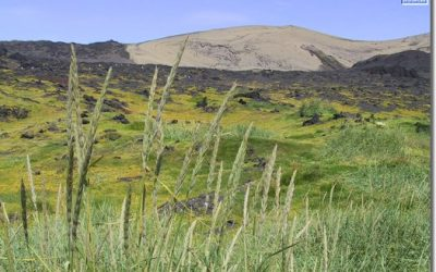 Málstofa á Líffræðiráðstefnu tileinkuð 50 ára afmæli Surtseyjar
